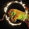 Цирки в Кошках